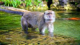 Monkey Jungle (Affenpark) - Miami (und Umgebung) - Tourism Media