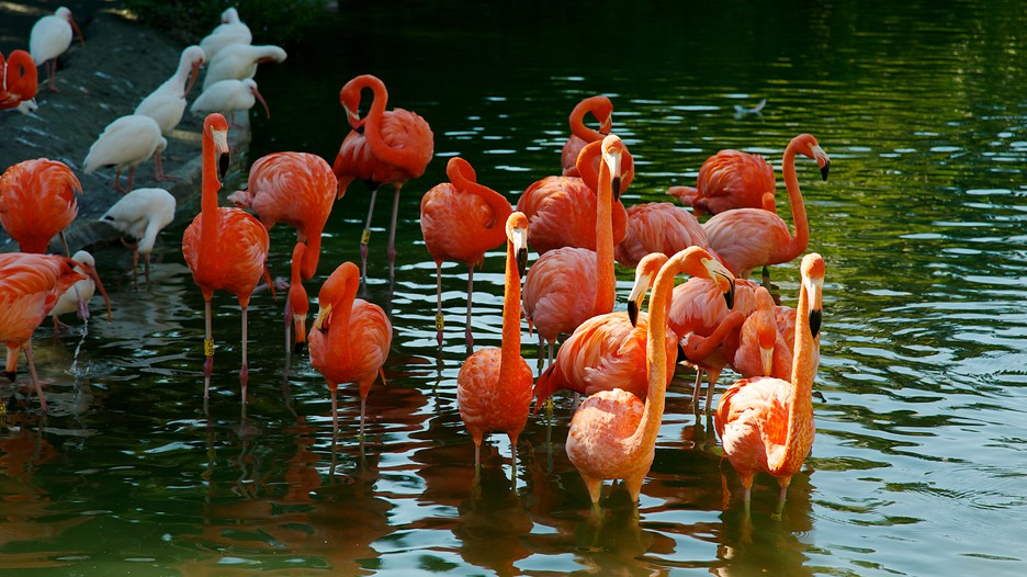 an introduction to americas zoos entertainment to conservation Introduction responsibilities to wildlife in field research and conservation  projects have always been complicated because ethical duties to.