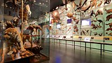 Amerikaans natuurhistorisch museum - New York - Tourism Media
