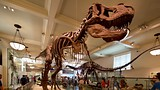 American Museum of Natural History - New York - Tourism Media