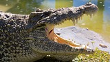 Gatorland - Florida - Tourism Media