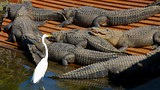 Gatorland® - Florida - Tourism Media