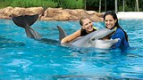 Showing item 15 of 40. Discovery Cove - Visit Orlando