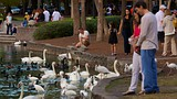 Lake Eola Park - Florida - Tourism Media