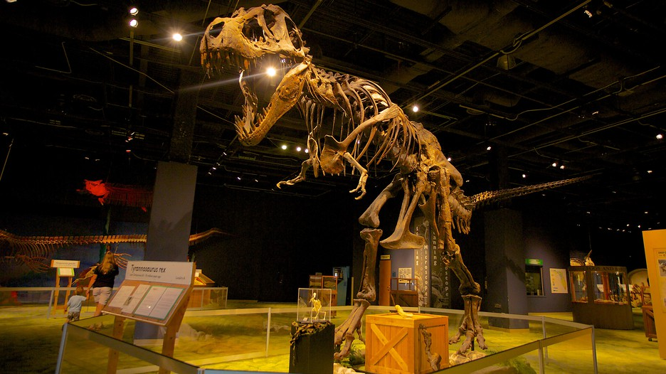 Image result for The Orlando Science Center: