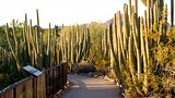 Desert Botanical Garden - Phoenix - Tourism Media