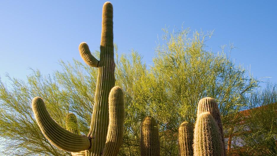 Desert Botanical Garden In Phoenix Arizona Expedia