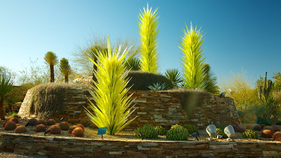 Desert Botanical Garden Phoenix Arizona Attraction