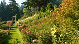 International Rose Test Garden - Portland - Tourism Media