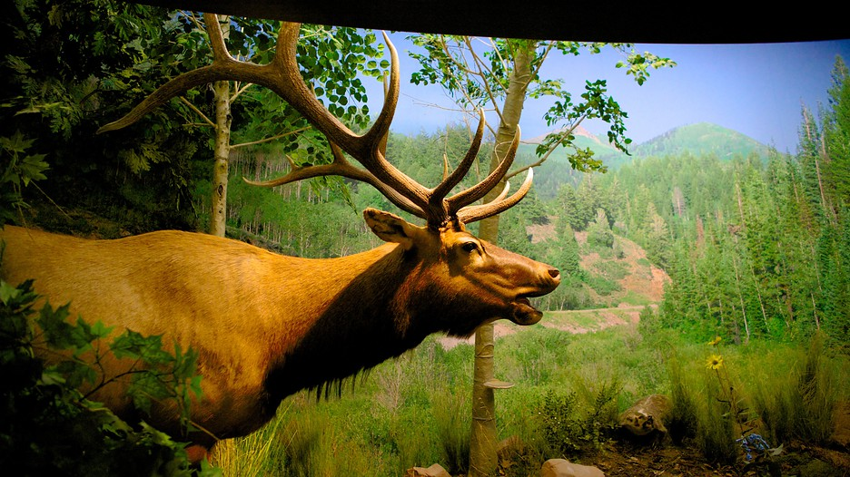 Welcome to the Utah Field House of Natural History. Discover the prehistoric world, dig for fossils, and explore the dinosaur garden. Within an mile radius of Vernal, evidence of the entire Earth's history .