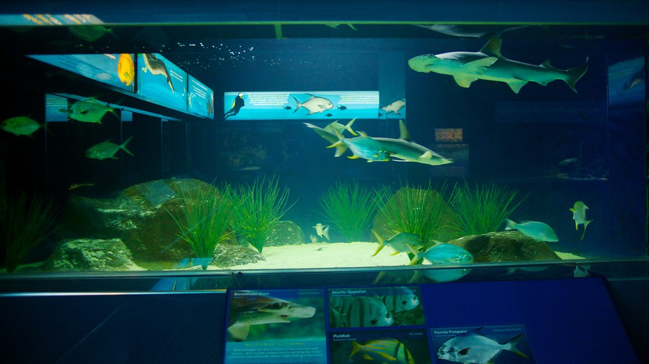 San antonio vacations 2017 package save up to 603 for Travel fish tank