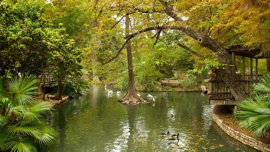 San Antonio Zoo And Aquarium San Antonio Texas