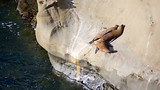 Showing item 38 of 48. La Jolla Cove - San Diego County - Tourism Media