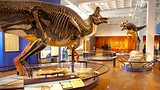 Showing item 9 of 48. San Diego Natural History Museum - Tourism Media
