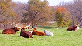 Grants Farm - Missouri - Tourism Media