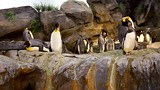 St. Louis Zoo - St. Louis - Tourism Media