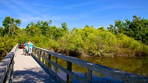 Boyd Hill Nature Park - St. Petersburg - Clearwater