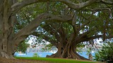 Royal Botanic Gardens - Sydney (en omgeving) - Tourism Media