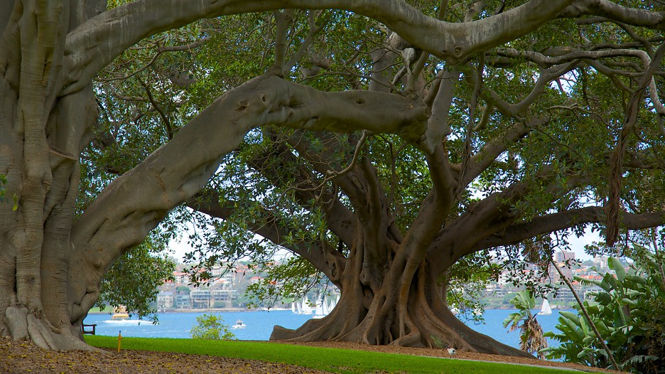 Royal Botanic Gardens In Sydney New South Wales Expedia Ca