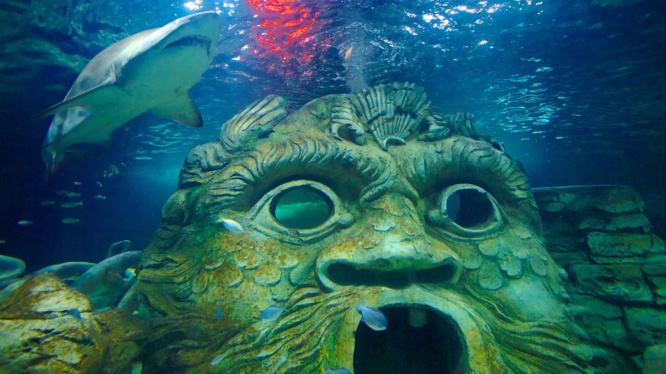 世界遺産みたいな水族館。