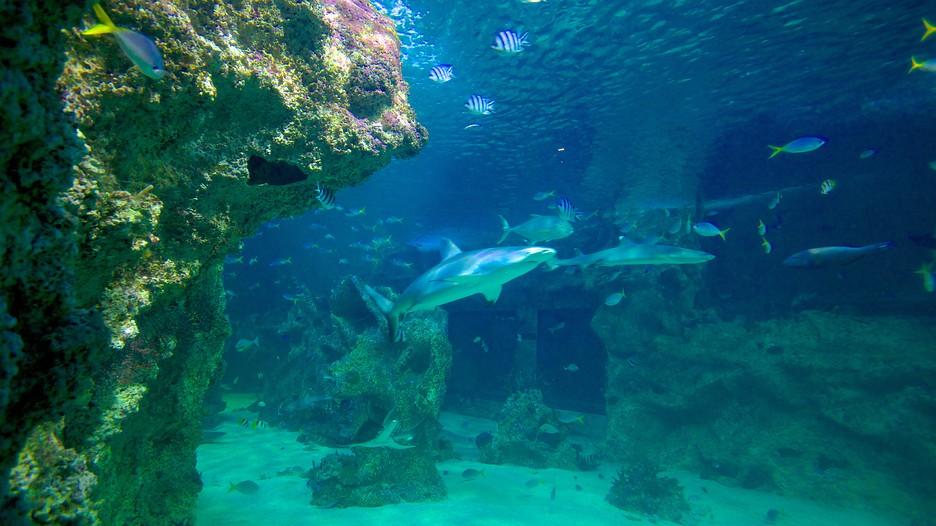 Sea Life Sydney Aquarium In Sydney New South Wales