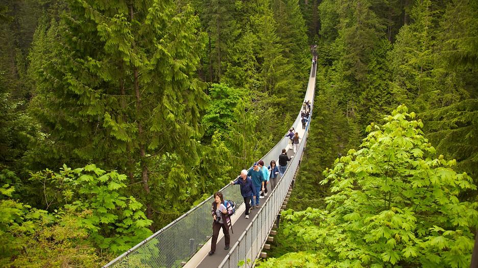 Capilano Suspension Bridge In Vancouver British Columbia