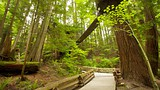 Capilano Suspension Bridge - British Columbia - Tourism Media
