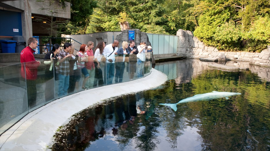 Vancouver Aquarium In Vancouver British Columbia Expedia