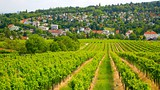 Weingut Wolff Vineyard - Austria - Tourism Media