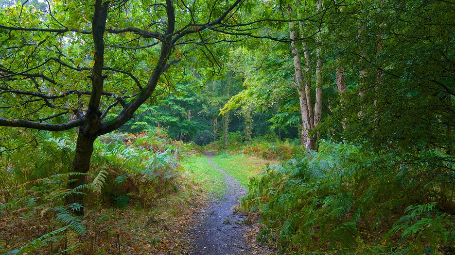Epping forest in southend on sea england expedia for Rainforest londra