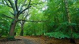 Epping Forest - Southend-on-Sea - Tourism Media
