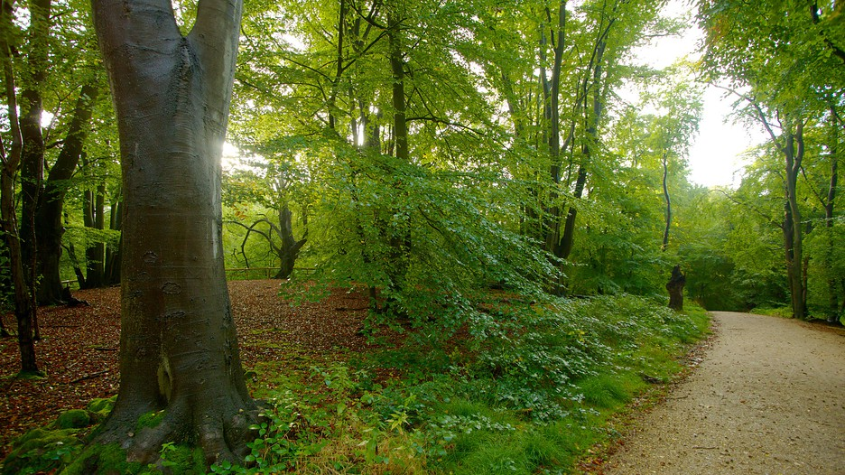 Epping Forest In Southend On Sea England Expedia Ca