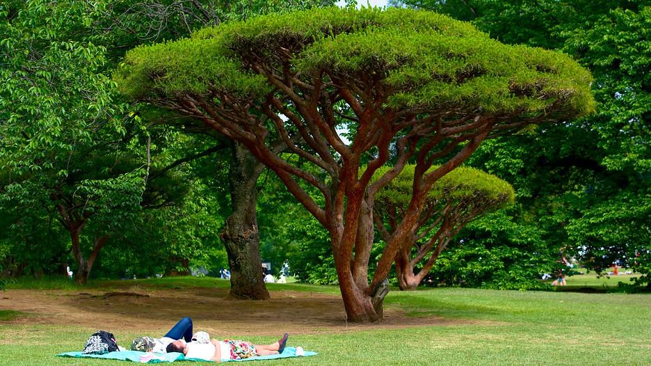 Jardin imp rial de shinjuku tokyo for Jardin imperial
