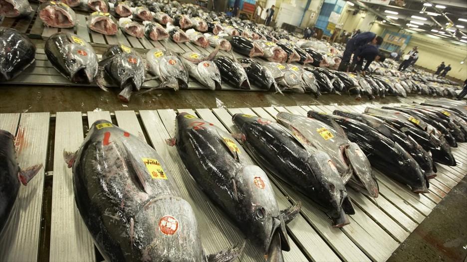 Tsukiji fish market in tokyo expedia for Japan fish market