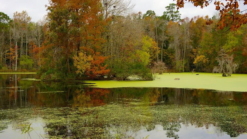 Magnolia Plantation And Gardens In Charleston South Carolina Expedia