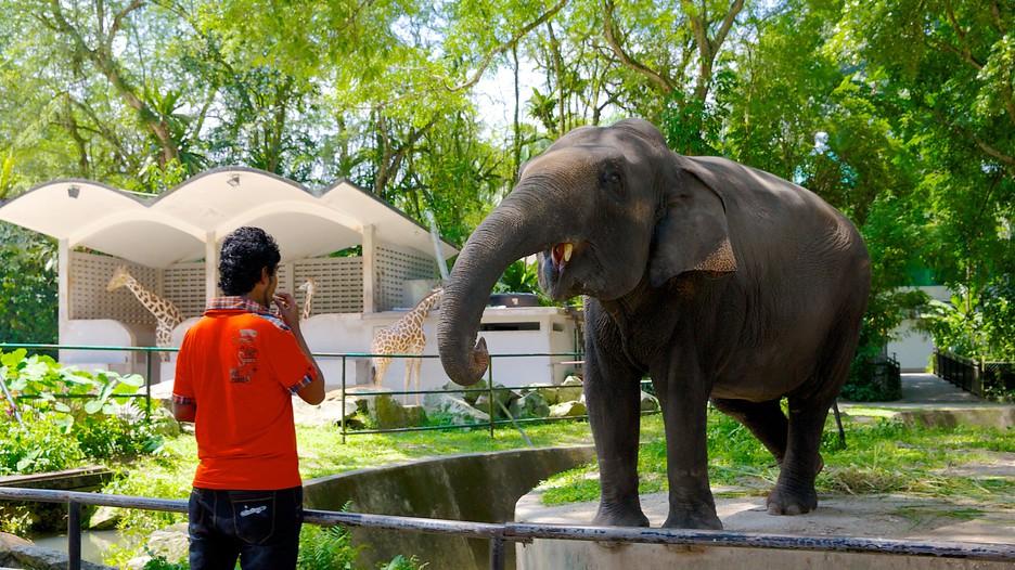 National Zoo - Kuala Lumpur, Attraction | Expedia.com.au