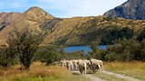 Showing item 33 of 90. Moke Lake - Queenstown - Tourism Media