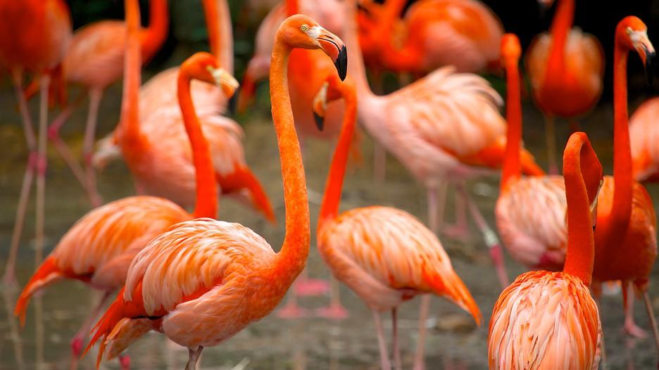 Cùng vé máy bay đi Singapore tham quan vườn chim Jurong Jurong-Bird-Park-38592