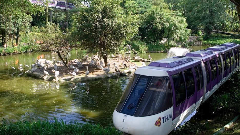 Cùng vé máy bay đi Singapore tham quan vườn chim Jurong Jurong-Bird-Park-38606