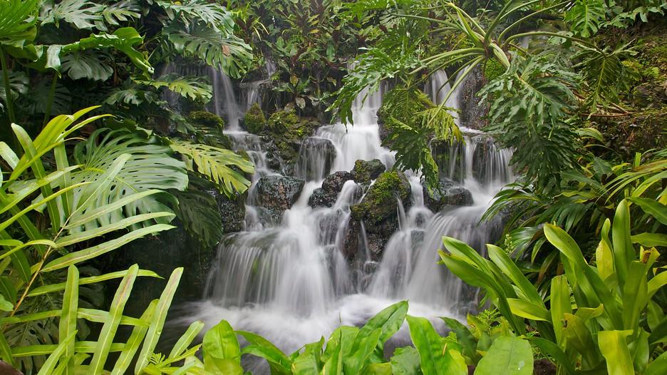 Singapore botanic gardens in singapore expedia - Botanic meubles de jardin ...