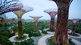 Gardens by the Bay (jardín botánico) - Asia - Tourism Media