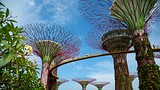 Showing item 3 of 50. Gardens by the Bay - Singapore - Tourism Media