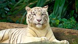 Singapore Zoo (Mandai Zoo) - Singapore - Tourism Media