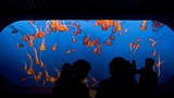 Monterey Bay Aquarium - Monterey - Tourism Media