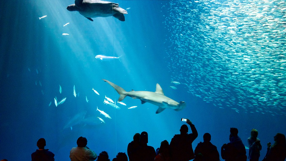 The Best Monterey Vacation Packages 2017 Save Up To C590