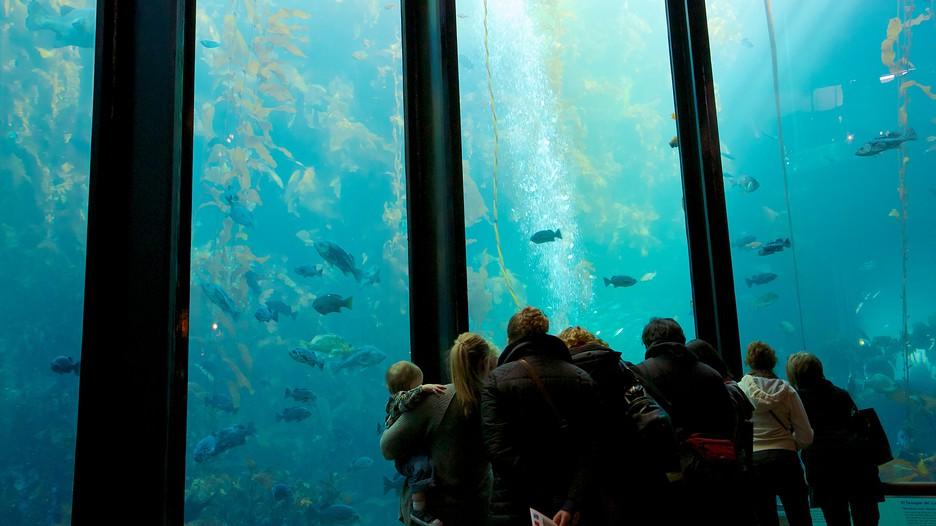 Monterey Bay Aquarium Monterey California Attraction