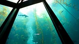 Monterey Bay Aquarium - California - Tourism Media