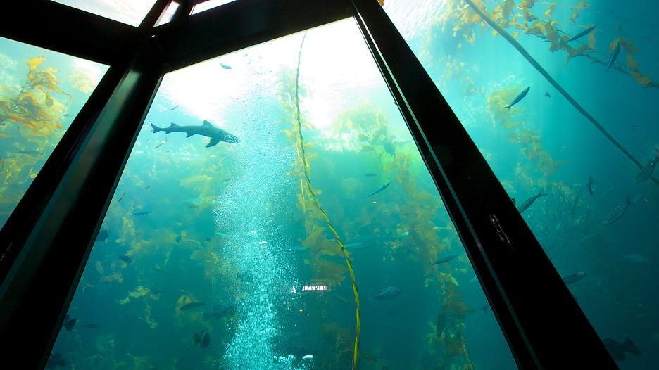 Monterey Bay Aquarium in Monterey, California | Expedia
