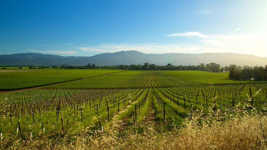 Napa Valley Holidays Cheap Napa Valley Holiday Packages
