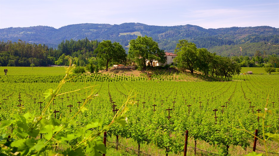 California Wine Tours Vacation Packages